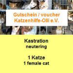 1 Katze aus Malta, Katzenhilfe Olli eV