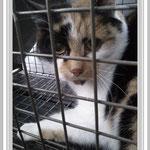 Katze Eva, Benjis Tierherzen, Erkelenz