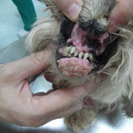 Eine Zahnreinigung wurde ein einem mit erledigt, ebenso die Kastration