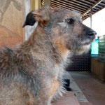 Hündin Fiona, Tierhilfe Antalya eV, Türkei
