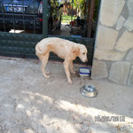 "Hündin ""Namenlos"", Gabis Tierschutz Antalya"