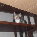 Katze Pina, Katzennothilfe Erkelenz