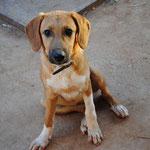 Hündin Felize, Tierhilfe Antalya eV