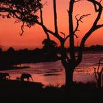 Elefanten am Chobe-Fluss in Botswana. Mehr Bilder in den Galerien Botswana I-III