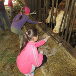 Jungkühe füttern