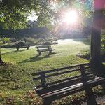 Morgenstimmung im Park