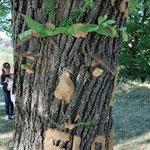 Baum mit Gesicht verzaubert