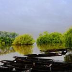 Delta de la Sauer. Elsass