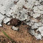 Détail de la couche inférieur du Covamat Fresh : film papier, terreau et semences