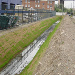 Protection d'un fossé drainant par natte coco renforcée type 400 - 1 mois après installation