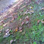 Végétalisation de la berge protégée par le géomat tridimensionnel Greenfix 75-TRM3D