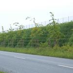 Mur gabion végétalisé avec natte Gabionmat