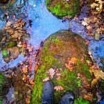 Ispirazioni tra foreste e ruscelli