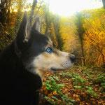 Accompagnati dai cani nella foresta