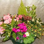 Une Composition de Plantes d'extérieures