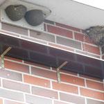 Künstliche Mehlschwalbennester mit Kotbrett an der Hauptstraße in Wiesmoor