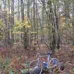 森の中で用を足しに行ったメンバー。秋の風景とサンジェはよく似あう