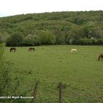 馬や牛もいっぱい!