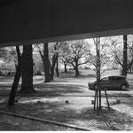 これは都内じゃ無くて母の墓のある桜木霊園