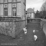 ハンティングの城でもあり19世紀後半からのインドでのハンティングの写真は興味深かった。で、放し飼いの白い鹿。