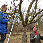 Obstbaumschnitt Am 19. Februar schnitten und räumten sieben Männergut zwei Stunden auf der oberen Streuobstwiese in Monsheim.