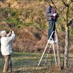 Baumschnitt kleine Obstbaumwiese Monsheim