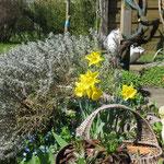 Frühling in Geesthelle: So langsam fängt alles an zu blühen