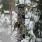 Vogel Nummer Eins entdeckt die Futterquelle