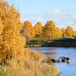 Herbst an der Geeste
