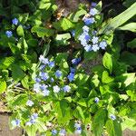 Frühling in Geesthelle: Gedenkemein