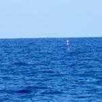 un casier de pêcheur par 5000 mètres de fond...