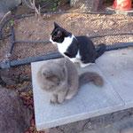 Gran Canaria - freilaufende Katzen