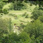 Naturrahmen mit Pferde