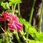 Blume mit Sonne