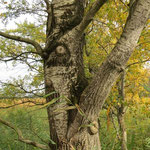 Baumkunst oder Körperkult?