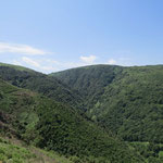 Dicht bewaldet
