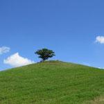 Ein Traum von einem Baum!