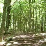 Man sieht den Wald vor lauter Bäumen nicht!