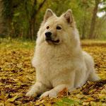 Fotoworkshop: Lea im Herbstlaub