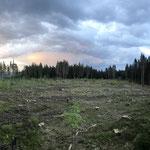 Aus einstmals idyllischen Bergköpfen des Schwarzwaldes sind vielerorts Kahlflächen geworden; das dringend benötigte Geld für die Aufforstungen fehlt den Waldbesitzern_Fischbach bei Schluchsee_03-2020