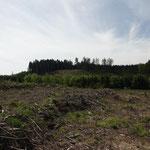 Große Käferflächen, im Herbst 2019 neu begründet, große Ausfälle der Pflanzung durch die Trockenheit_Heiligenberg