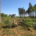 Sturmfläche - 1.000 Kubikmeter Holz angefallen_Villingen-Schwenningen_05-2020