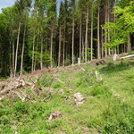 Käferlöcher aus dem Trockensommer 2019 (zum Teil bereits neu bepflanzt)_Altheiligenberg_05-2020