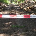 Waldwege leiden unter der Zwangsernte von Schadholz _Villingen-Schwenningen_05-2020