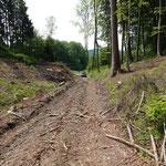 Weg nach der Sturmholzaufarbeitung - selbst mit Jeep nicht mehr befahrbar_Salem_05-2020