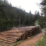Dezentrale Nasslager können einen wichtigen Beitrag zur Holzkonservierung leisten_Vöhrenbach_04- 2020
