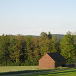 Schadbild Eiche 2_östlicher Ostalbkreis_07-2020