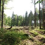 Käferlöcher aus dem Trockensommer 2019_Denkingen_05-2020