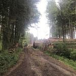Große Holzmengen lagern derzeit unverkäuflich an den Waldstraßen_Eberhardzell