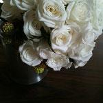 白薔薇 アップ